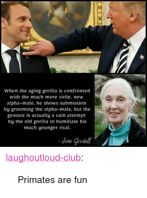 "humiliate: When the aging gorilla is confronted  with the much more virile, new  alpha-male, he shows submission  by grooming the alpha-male, but the  gesture is actually a vain attempt  by the old gorilla to humiliate his  much younger rival <p><a href=""http://laughoutloud-club.tumblr.com/post/173410653844/primates-are-fun"" class=""tumblr_blog"">laughoutloud-club</a>:</p>  <blockquote><p>Primates are fun</p></blockquote>"
