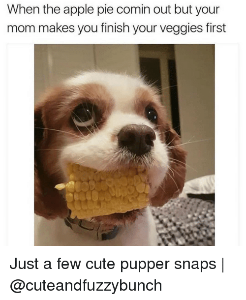 Apple, Cute, and Memes: When the apple pie comin out but your  mom makes you finish your veggies first Just a few cute pupper snaps | @cuteandfuzzybunch