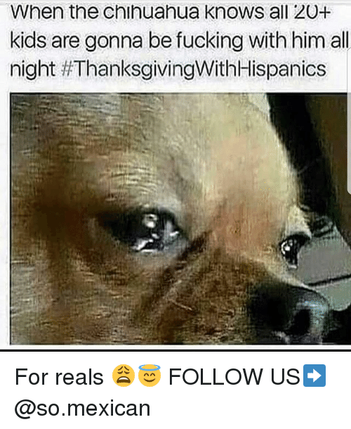 Chihuahua, Fucking, and Memes: When the chihuahua knows all 20+  kids are gonna be fucking with him all  night For reals 😩😇 FOLLOW US➡️ @so.mexican