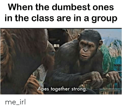 apes: When the dumbest ones  in the class are in a group  Apes together strong me_irl