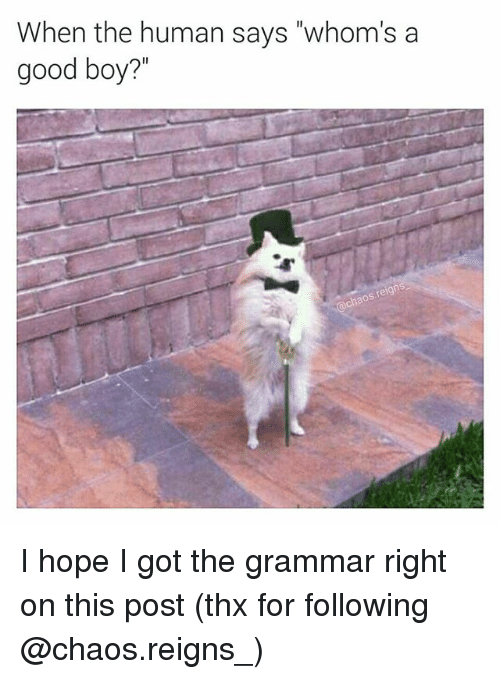"""Grammarly: When the human says """"whom's a  good boy?'"""" I hope I got the grammar right on this post (thx for following @chaos.reigns_)"""