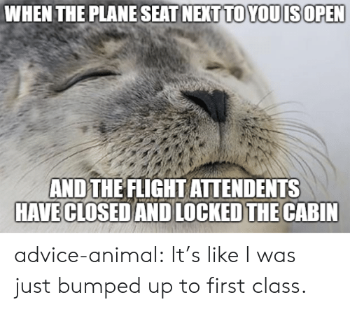 Advice, Tumblr, and Animal: WHEN THE PLANE SEAT NEXTTO YOUISOPEN  AND THE FLIGHT ATTENDENTS  HAVE CLOSEDAND LOCKED THE CABIN advice-animal:  It's like I was just bumped up to first class.