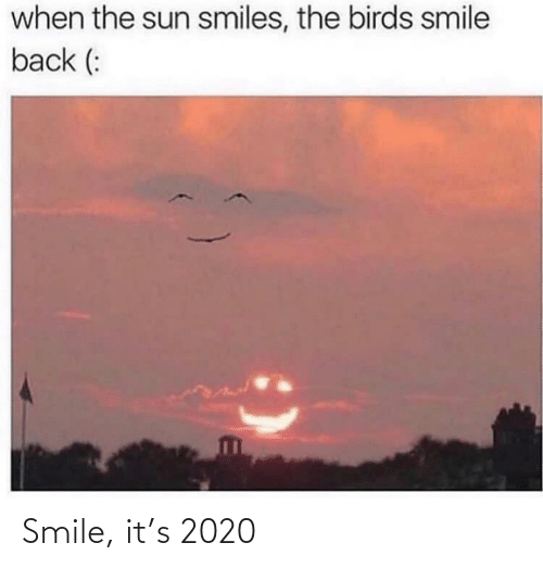 Birds: when the sun smiles, the birds smile  back (: Smile, it's 2020