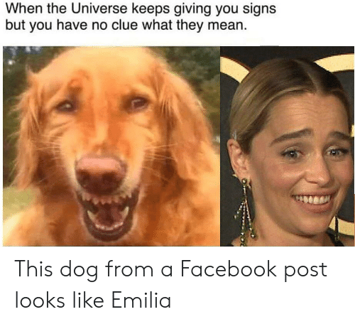 Facebook, Mean, and Dog: When the Universe keeps giving you signs  but you have no clue what they mean This dog from a Facebook post looks like Emilia