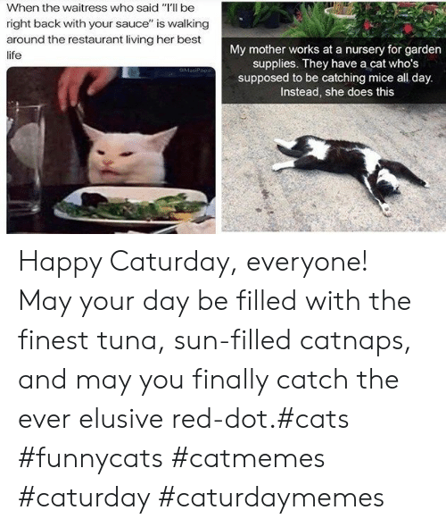 "Caturday: When the waitress who said ""Il be  right back with your sauce"" is walking  around the restaurant living her best  My mother works at a nursery for garden  supplies. They have a cat who's  supposed to be catching mice all day.  Instead, she does this  life  MasiPopa Happy Caturday, everyone! May your day be filled with the finest tuna, sun-filled catnaps, and may you finally catch the ever elusive red-dot.#cats #funnycats #catmemes #caturday #caturdaymemes"