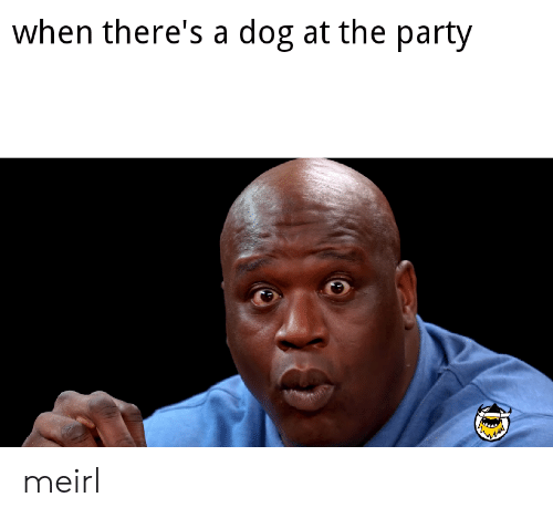 Party, MeIRL, and Dog: when there's a dog at the party meirl
