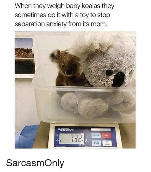 Funny, Memes, and Zero: When they weigh baby koalas they  sometimes do it with a toy to stop  separation anxiety from its mom  Wedderbum  132  MODE  ZERO SarcasmOnly
