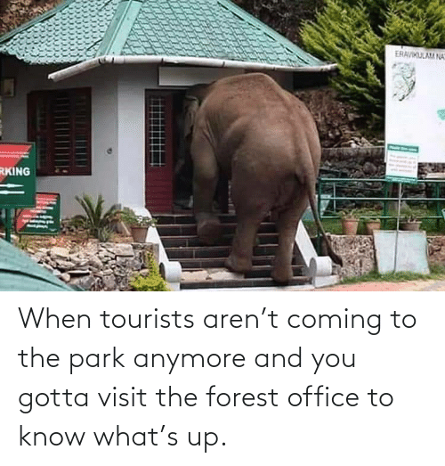 anymore: When tourists aren't coming to the park anymore and you gotta visit the forest office to know what's up.
