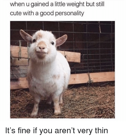 Cute, Good, and Personality: when u gained a little weight but still  cute with a good personality <p>It&rsquo;s fine if you aren&rsquo;t very thin</p>