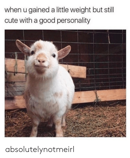 Cute, Good, and Personality: when u gained a little weight but still  cute with a good personality absolutelynotmeirl