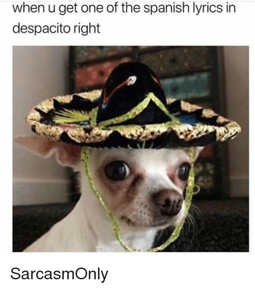 Funny, Memes, and Spanish: when u get one of the spanish lyrics in  despacito right SarcasmOnly