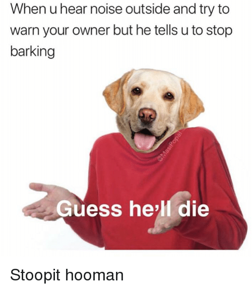 Dank, Guess, and Hell: When u hear noise outside and try to  warn your owner but he tells u to stop  barking  Guess hell die Stoopit hooman