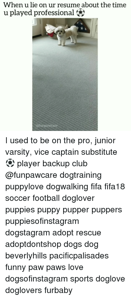 Club, Dogs, and Fifa: When u lie on ur resume about the time  u played professional I used to be on the pro, junior varsity, vice captain substitute ⚽ player backup club @funpawcare dogtraining puppylove dogwalking fifa fifa18 soccer football doglover puppies puppy pupper puppers puppiesofinstagram dogstagram adopt rescue adoptdontshop dogs dog beverlyhills pacificpalisades funny paw paws love dogsofinstagram sports doglove doglovers furbaby