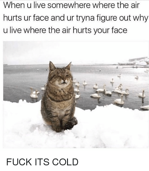 Memes, Fuck, and Live: When u live somewhere where the air  hurts ur face and ur tryna figure out why  u live where the air hurts your face FUCK ITS COLD