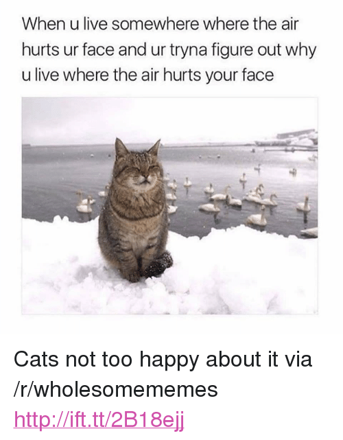 "Cats, Happy, and Http: When u live somewhere where the air  hurts ur face and ur tryna figure out why  u live where the air hurts your face <p>Cats not too happy about it via /r/wholesomememes <a href=""http://ift.tt/2B18ejj"">http://ift.tt/2B18ejj</a></p>"
