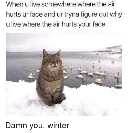 Winter, Live, and Air: When u live somewhere where the air  hurts ur face and ur tryna figure out why  u live where the air hurts your face Damn you, winter
