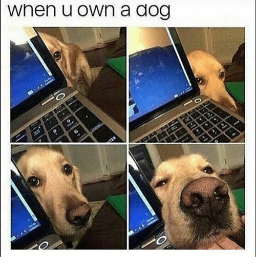 Funny, Dog, and Own: when u own a dog