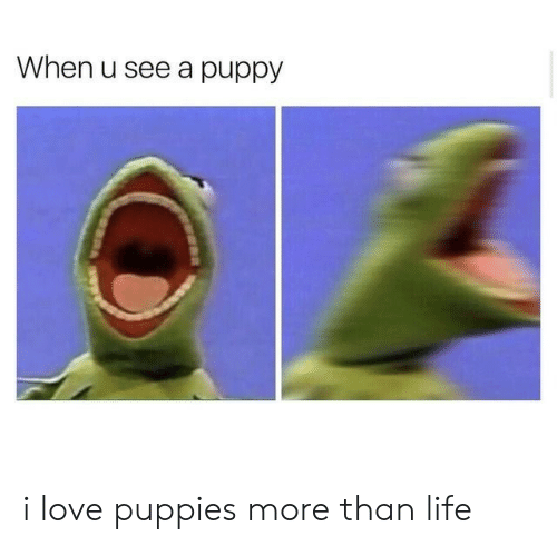 Puppies: When u see a puppy i love puppies more than life
