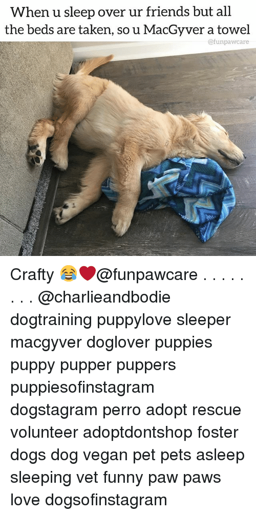 Dogs, Friends, and Funny: When u sleep over ur friends but all  the beds are taken, so u MacGyver a towel  @funpawcare Crafty 😂❤️@funpawcare . . . . . . . . @charlieandbodie dogtraining puppylove sleeper macgyver doglover puppies puppy pupper puppers puppiesofinstagram dogstagram perro adopt rescue volunteer adoptdontshop foster dogs dog vegan pet pets asleep sleeping vet funny paw paws love dogsofinstagram