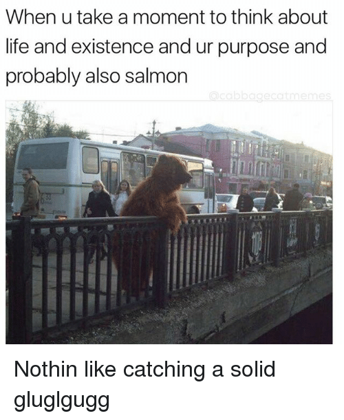 Life, Salmon, and Dank Memes: When u take a moment to think about  life and existence and ur purpose and  probably also salmon Nothin like catching a solid gluglgugg