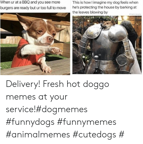 Fresh, Memes, and House: When ur at a BBQ and you see more  This is how I imagine my dog feels when  he's protecting the house by barking at  the leaves blowing by  burgers are ready but ur too full to move  tank sinatra Delivery! Fresh hot doggo memes at your service!#dogmemes #funnydogs #funnymemes #animalmemes #cutedogs #