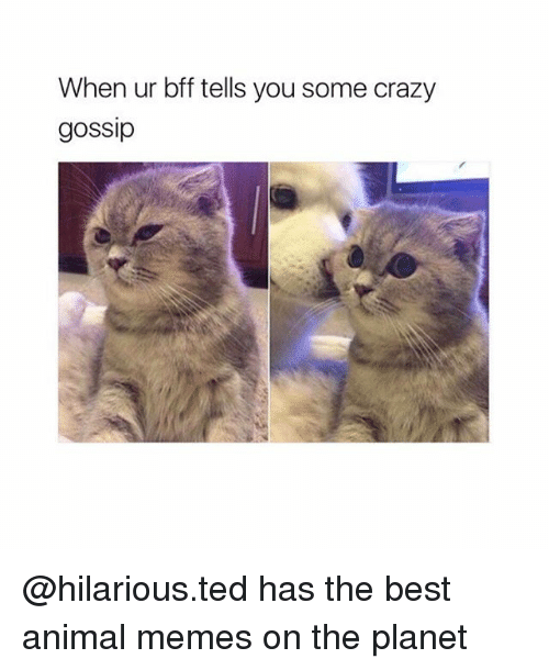 Crazy, Memes, and Ted: When ur bff tells you some crazy  gossip @hilarious.ted has the best animal memes on the planet