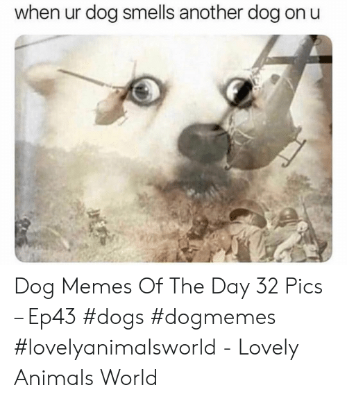 Animals, Dogs, and Memes: when ur dog smells another dog on u Dog Memes Of The Day 32 Pics – Ep43 #dogs #dogmemes #lovelyanimalsworld - Lovely Animals World