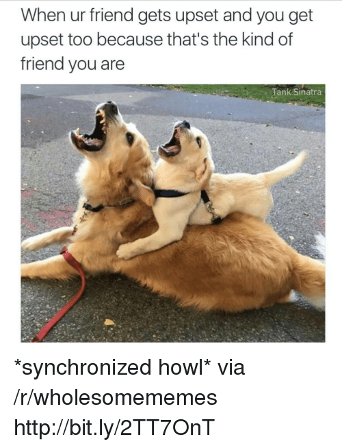 Http, Tank, and Sinatra: When ur friend gets upset and you get  upset too because that's the kind of  friend you are  Tank Sinatra *synchronized howl* via /r/wholesomememes http://bit.ly/2TT7OnT