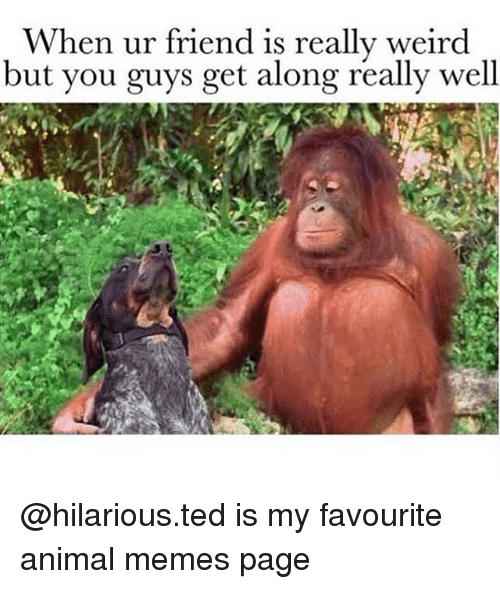 Memes, Ted, and Weird: When ur friend is really weird  but you guys get along really well @hilarious.ted is my favourite animal memes page