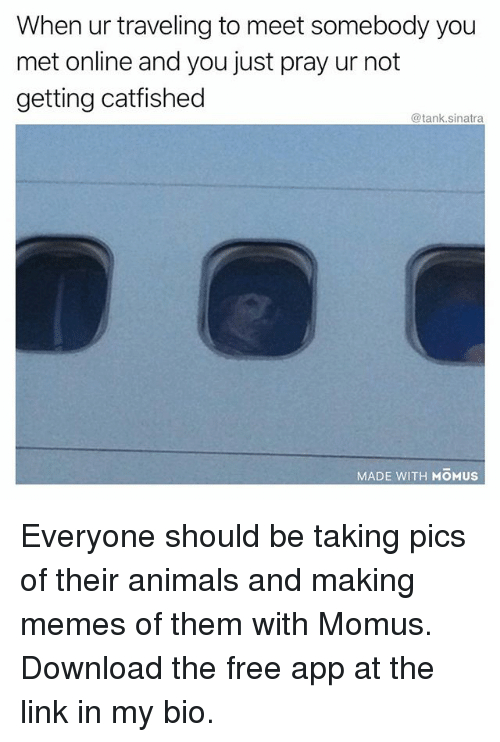 Animals, Funny, and Memes: When ur traveling to meet somebody you  met online and you just pray ur not  getting catfished  @tank.sinatra  MADE WITH MOMUS Everyone should be taking pics of their animals and making memes of them with Momus. Download the free app at the link in my bio.