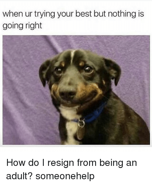 Being an Adult, Memes, and Best: when ur trying your best but nothing is  going right How do I resign from being an adult? someonehelp