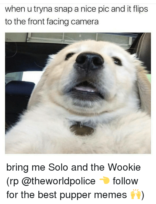 wookies: when utryna snap a nice pic and it flips  to the front facing camera bring me Solo and the Wookie (rp @theworldpolice 👈 follow for the best pupper memes 🙌)