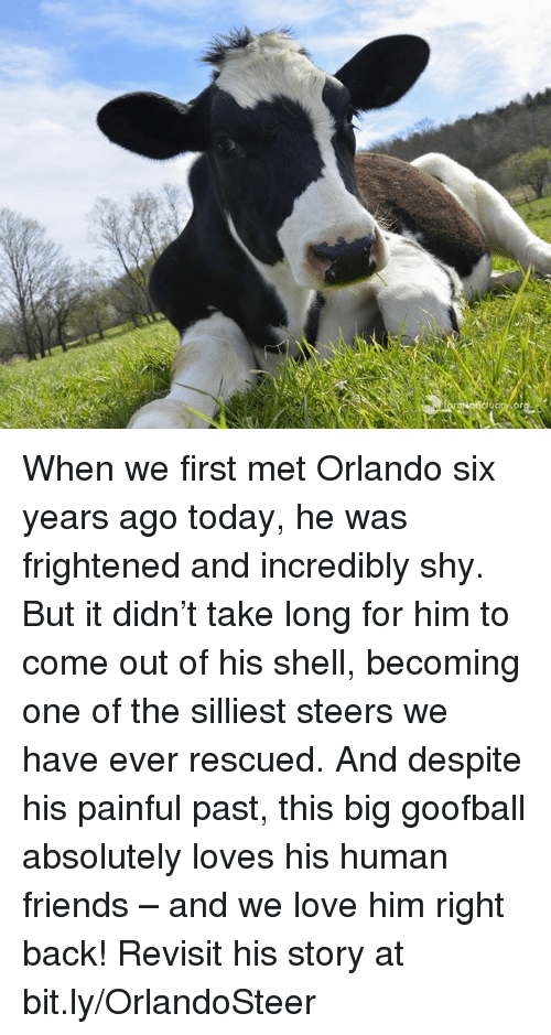 Pasteing: When we first met Orlando six years ago today, he was frightened and incredibly shy. But it didn't take long for him to come out of his shell, becoming one of the silliest steers we have ever rescued. And despite his painful past, this big goofball absolutely loves his human friends – and we love him right back!  Revisit his story at bit.ly/OrlandoSteer
