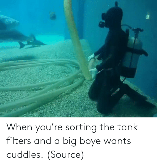 When Youre: When you're sorting the tank filters and a big boye wants cuddles. (Source)