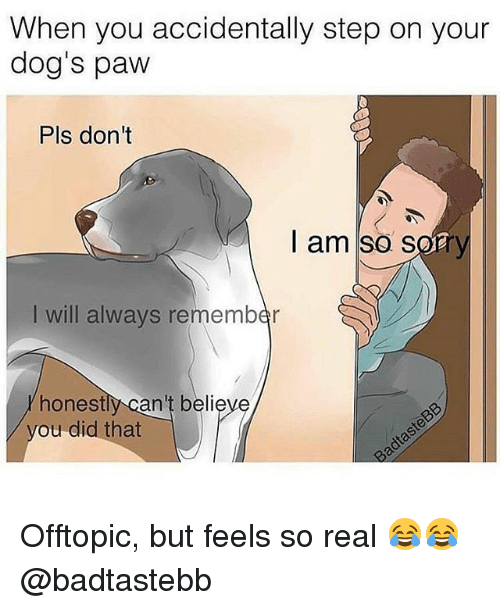Dogs, Gym, and Sorry: When you accidentally step on your  dog's pavw  Pls dont  I am so sorry  I will always remember  honestly can't believe  ou did that Offtopic, but feels so real 😂😂 @badtastebb
