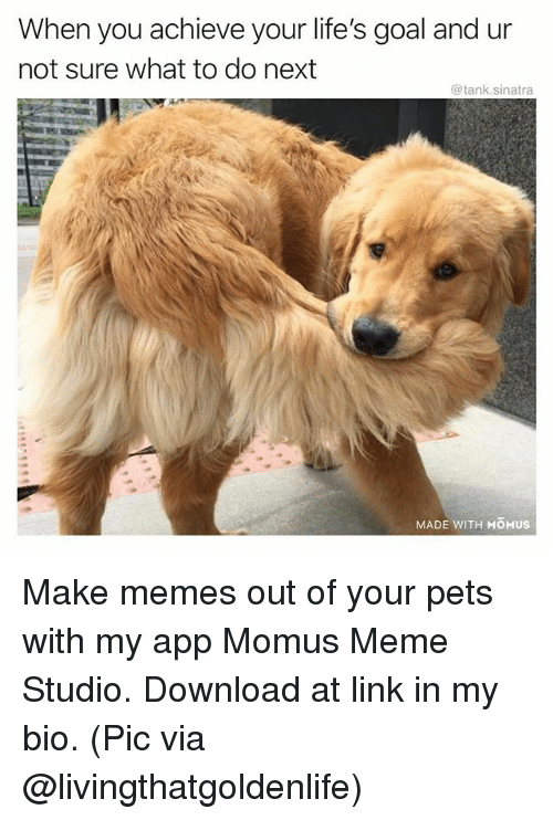 Funny, Meme, and Memes: When you achieve your life's goal and ur  not sure what to do next  @tank.sinatra  MADE WITH MOMUS Make memes out of your pets with my app Momus Meme Studio. Download at link in my bio. (Pic via @livingthatgoldenlife)