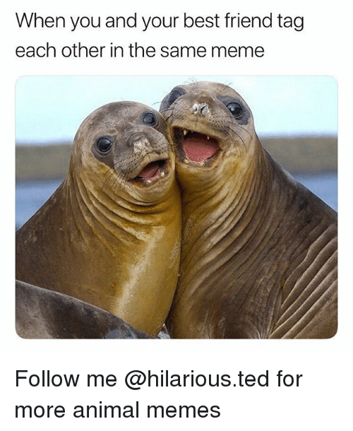 Best Friend, Funny, and Meme: When you and your best friend tag  each other in the same meme Follow me @hilarious.ted for more animal memes