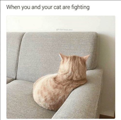 Memes, Ted, and Hilarious: When you and your cat are fighting  @hilarious ted