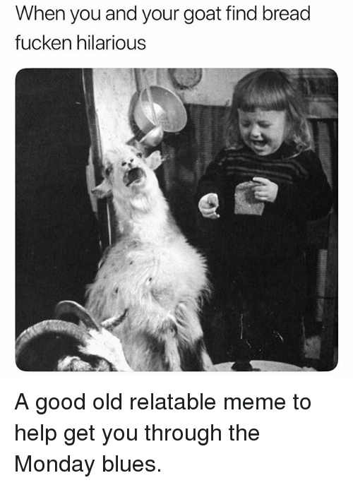 Funny, Meme, and Goat: When you and your goat find bread  fucken hilarious A good old relatable meme to help get you through the Monday blues.
