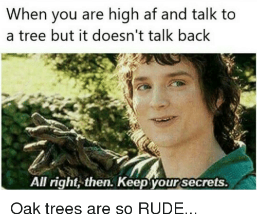 When You Are High Af and Talk to a Tree but It Doesn't Talk