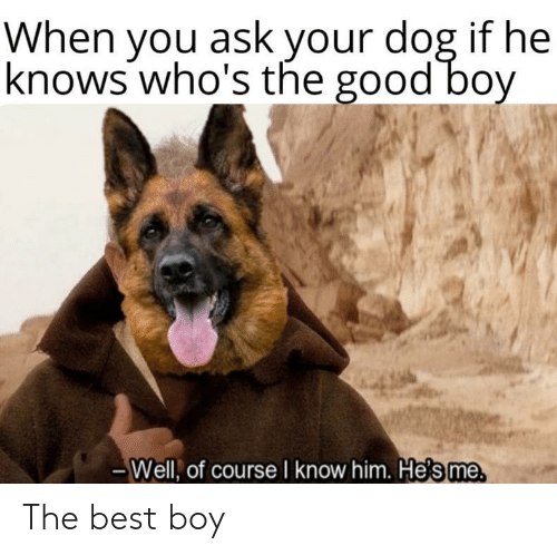 Best, Good, and Boy: When you ask your dog if he  knows who's the good bov  urse I know him. H  Well, of co  e's me The best boy