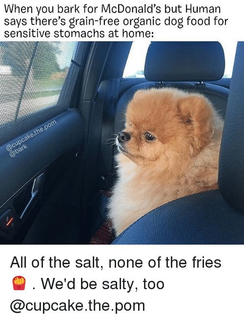 Food, McDonalds, and Memes: When you bark for McDonald's but Human  says there's grain-free organic dog food for  sensitive stomachs at home:  @cupcake.the.pom  @bark All of the salt, none of the fries 🍟 . We'd be salty, too @cupcake.the.pom