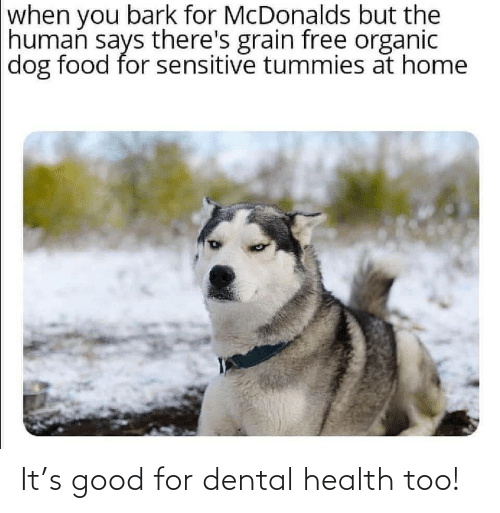 Food: when you bark for McDonalds but the  human says there's grain free organic  dog food for sensitive tummies at home It's good for dental health too!