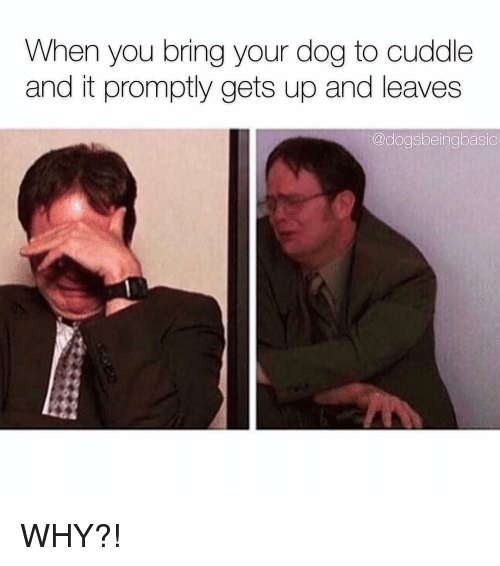 Memes, 🤖, and Dog: When you bring your dog to cuddle  and it promptly gets up and leaves  @doasbeingbasic WHY?!