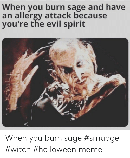 Halloween, Meme, and Sage: When you burn sage and have  an allergy attack because  you're the evil spirit When you burn sage #smudge #witch #halloween meme