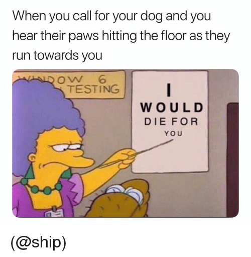 Run, Dank Memes, and Dog: When you call for your dog and you  hear their paws hitting the floor as they  run towards you  oW 6  TESTING  WOUL D  DIE FOR  YOU (@ship)