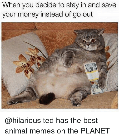 Memes, Money, and Ted: When you decide to stay in and save  your money instead of go out @hilarious.ted has the best animal memes on the PLANET