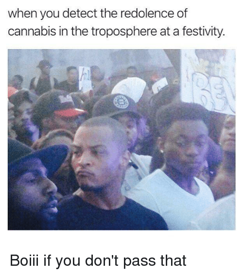 Dank Memes, Cannabis, and You: when you detect the redolence of  cannabis in the troposphere at a festivity. Boiii if you don't pass that