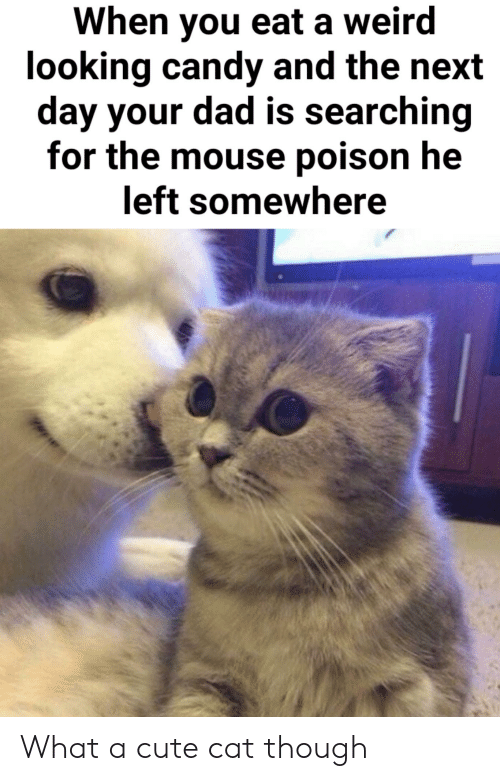 Candy, Cute, and Dad: When you eat a weird  looking candy and the next  day your dad is searching  for the mouse poison he  left somewhere What a cute cat though