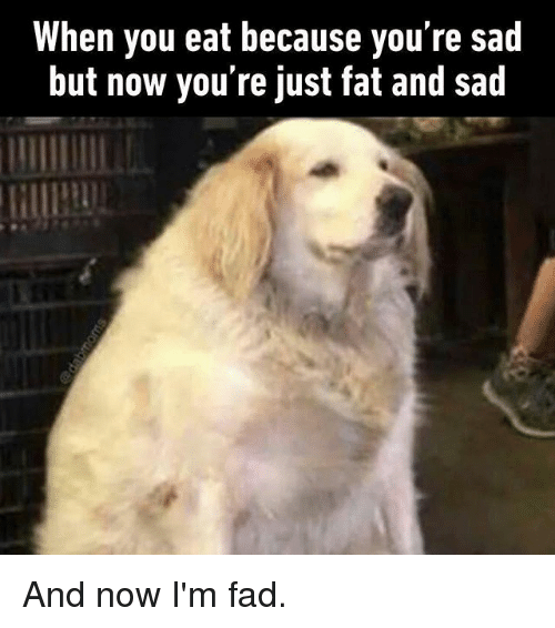 Memes, Fat, and Sad: When you eat because you're sad  but now you're just fat and sad And now I'm fad.